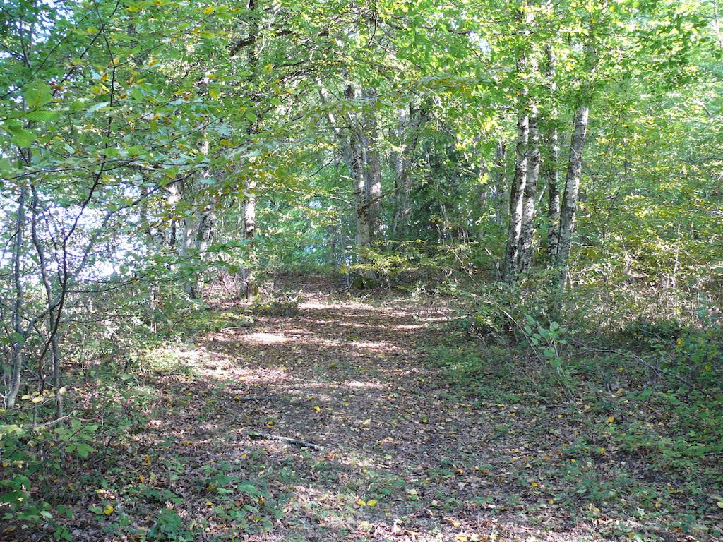 Chemin de forêt